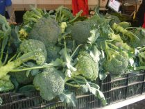 The Largest Broccoli I've Ever Seen!